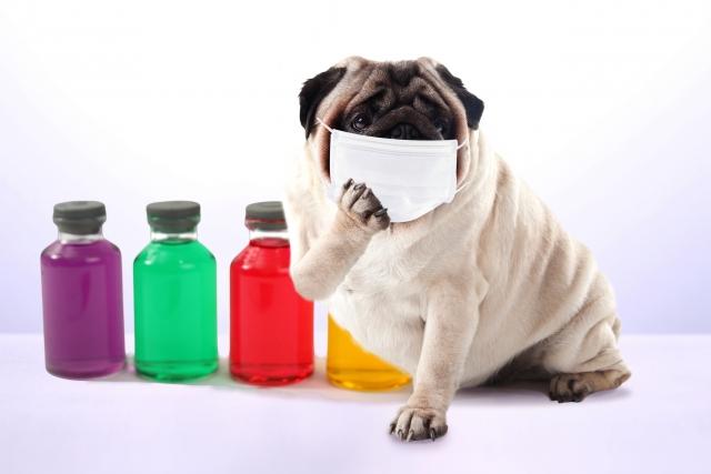インフルエンザは風邪の一種?【エピエ DNA&腸内フローラ 知識編】